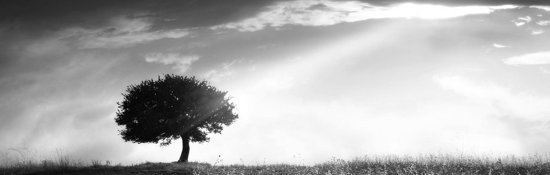 Foto von Baum in Schwarz-Weiß