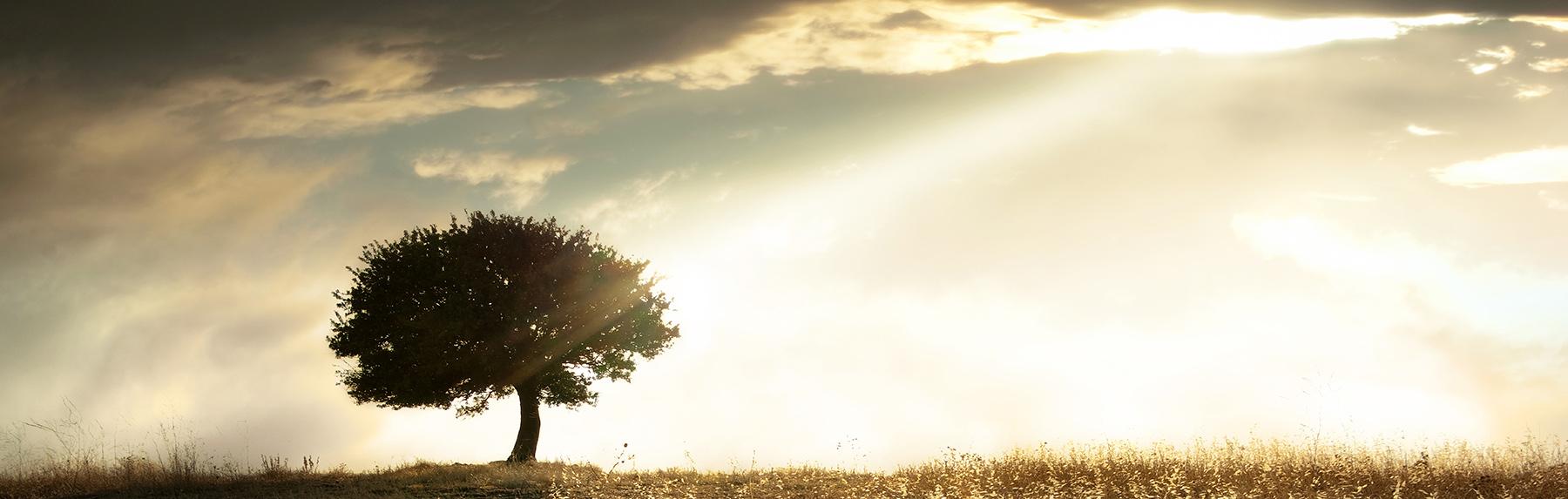 Foto von Baum in Farbe